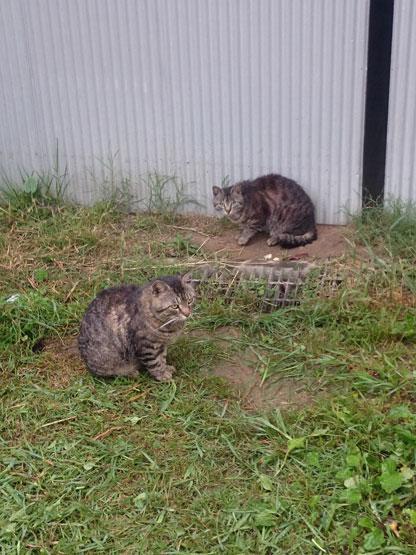 納屋に住み着いている野良猫