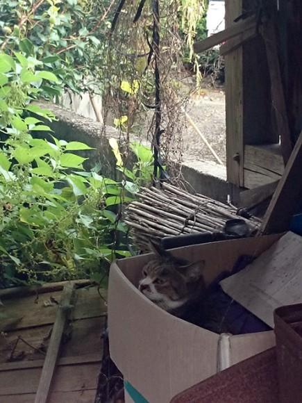 祖母宅の猫